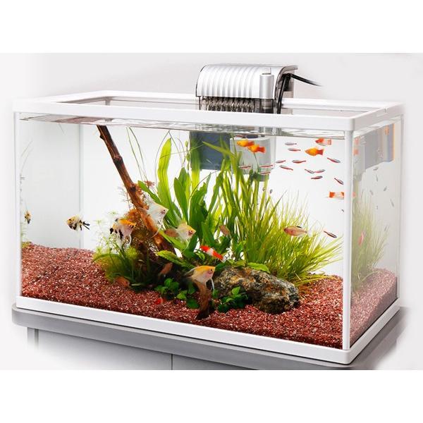 テトラ ホワイトアクアリウム600 60cm観賞魚飼育セット 熱帯魚・アクアリウム/水槽・アクアリウム/水槽セット
