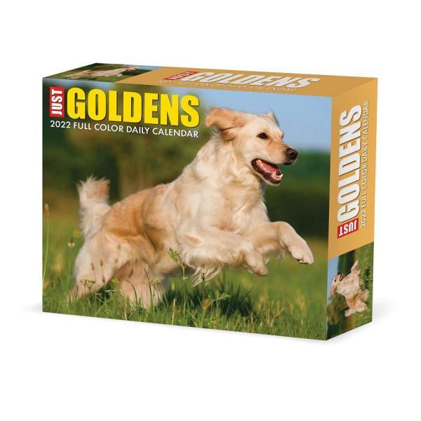 ゴールデンレトリバーカレンダー 2022年 令和4年 動物 犬種カレンダー 犬 ドッグ 卓上カレンダー 卓上タイプ デスクカレンダー 日めくりカレンダー BOX 輸入