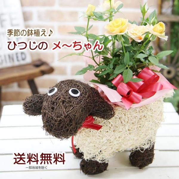 送料無料 色々選べる もこもこおなかのひつじのメーさん又は福を呼ぶ ふくろうちゃんの季節の鉢花  鉢植え 寄せカゴ ギフト プレゼント|tsukaguchi