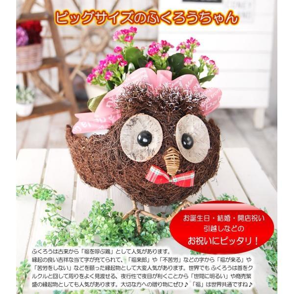 送料無料 色々選べる もこもこおなかのひつじのメーさん又は福を呼ぶ ふくろうちゃんの季節の鉢花  鉢植え 寄せカゴ ギフト プレゼント|tsukaguchi|09