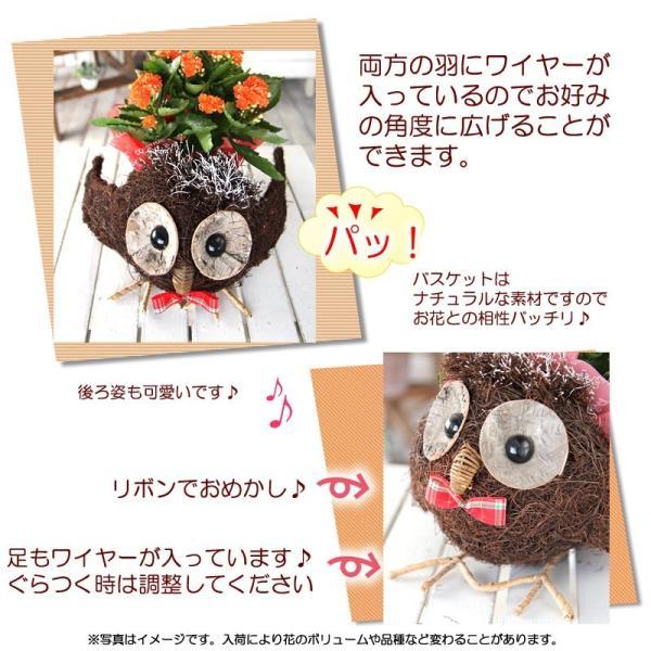 送料無料 色々選べる もこもこおなかのひつじのメーさん又は福を呼ぶ ふくろうちゃんの季節の鉢花  鉢植え 寄せカゴ ギフト プレゼント|tsukaguchi|10