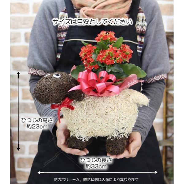 送料無料 色々選べる もこもこおなかのひつじのメーさん又は福を呼ぶ ふくろうちゃんの季節の鉢花  鉢植え 寄せカゴ ギフト プレゼント|tsukaguchi|05