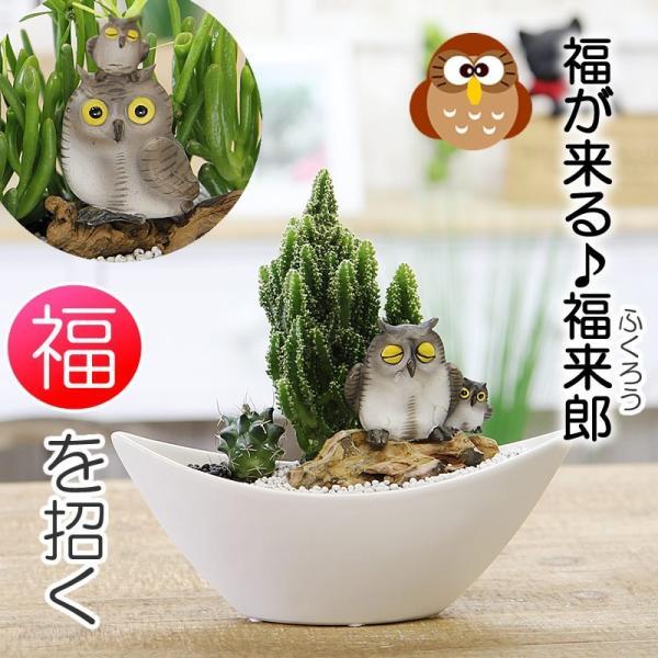 福を招く 縁起の良いふくろう  ジオラマ サボテン  F-42 観葉植物 人気 誕生日 プレゼント|tsukaguchi