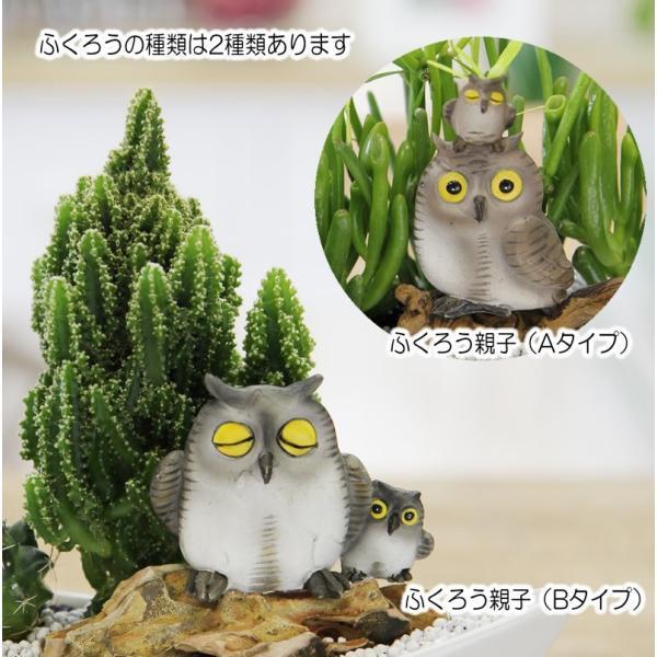 福を招く 縁起の良いふくろう  ジオラマ サボテン  F-42 観葉植物 人気 誕生日 プレゼント|tsukaguchi|04