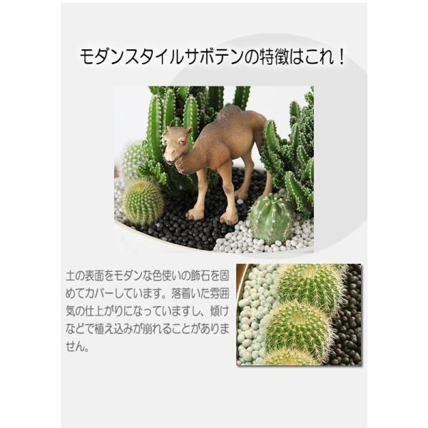 福を招く 縁起の良いふくろう  ジオラマ サボテン  F-42 観葉植物 人気 誕生日 プレゼント|tsukaguchi|05