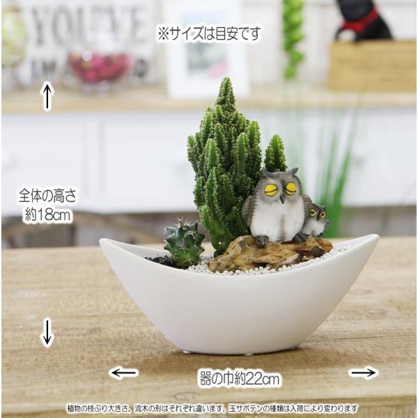 福を招く 縁起の良いふくろう  ジオラマ サボテン  F-42 観葉植物 人気 誕生日 プレゼント|tsukaguchi|06