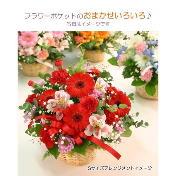 花 ギフト 誕生日 プレゼント フラワーアレンジメント  送料無料 季節の花でおまかせ お得サイズS  画像配信OK|tsukaguchi|11