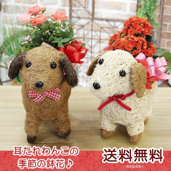 送料無料 可愛い瞳が人気 選べる わんこの背中に季節の鉢植え ギフト プレゼント|tsukaguchi