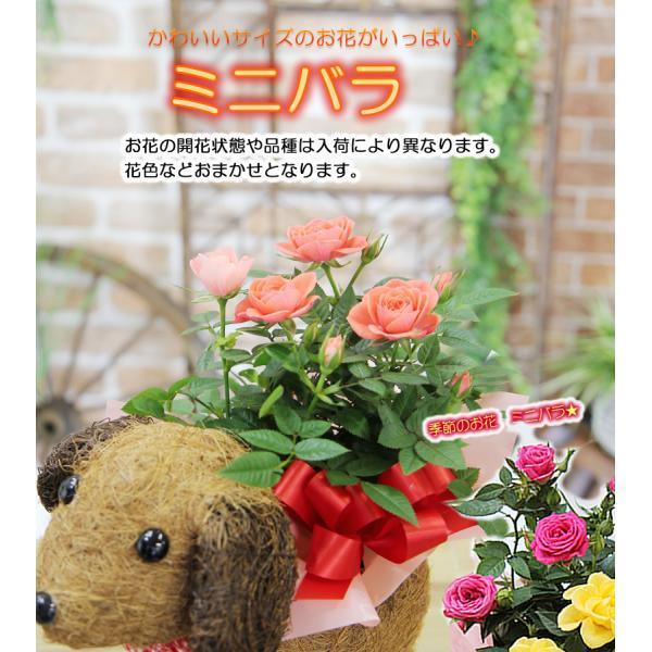 送料無料 可愛い瞳が人気 選べる わんこの背中に季節の鉢植え ギフト プレゼント|tsukaguchi|04