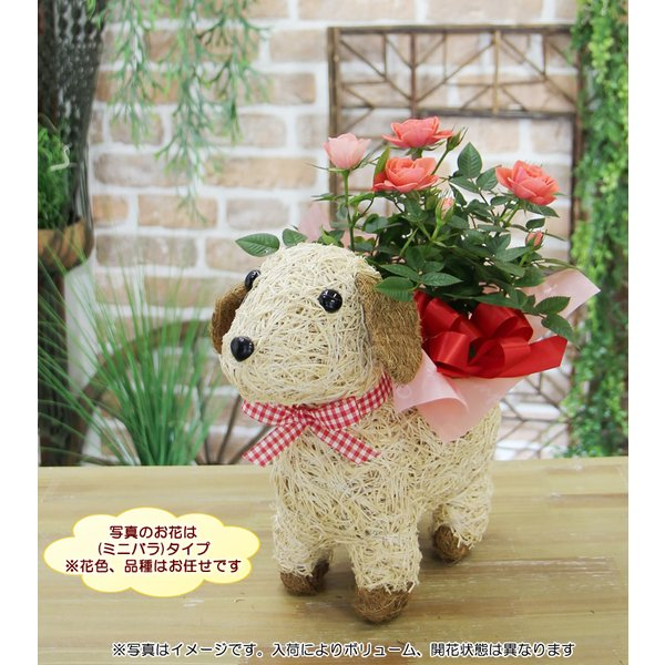 送料無料 可愛い瞳が人気 選べる わんこの背中に季節の鉢植え ギフト プレゼント|tsukaguchi|05