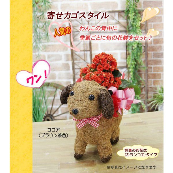 送料無料 可愛い瞳が人気 選べる わんこの背中に季節の鉢植え ギフト プレゼント|tsukaguchi|06