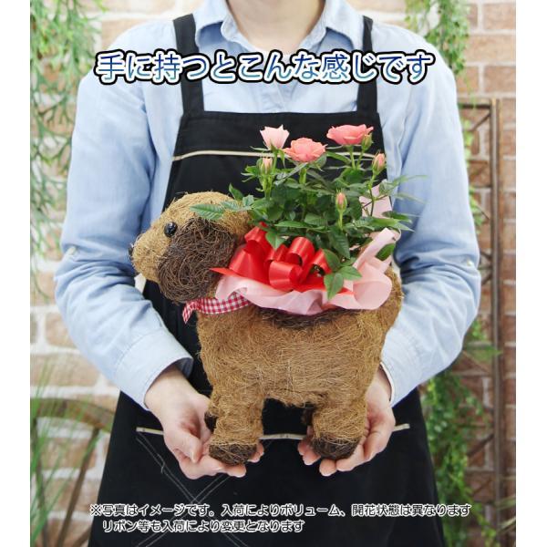 送料無料 可愛い瞳が人気 選べる わんこの背中に季節の鉢植え ギフト プレゼント|tsukaguchi|09
