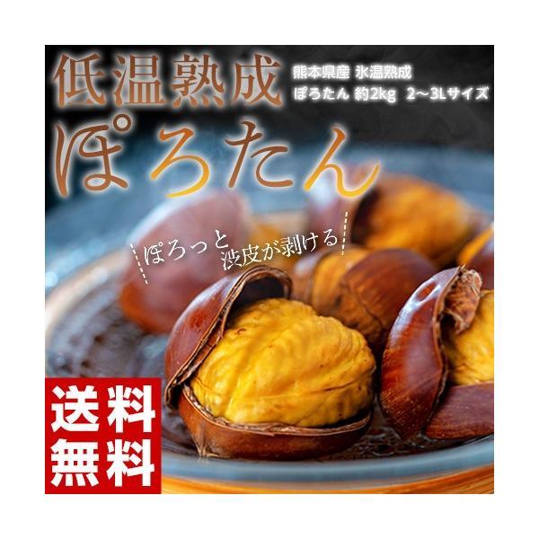 JA菊池 『低温熟成 ぽろたん』熊本県産 栗 2L〜3Lサイズ 約2kg ※冷蔵 産地直送 送料無料