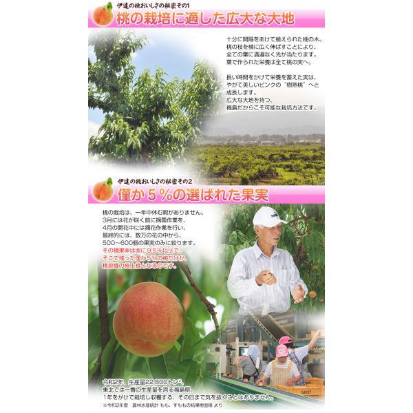 桃 もも 福島県産 伊達の桃 特秀品 約1.5kg×2箱 1箱あたり5〜10玉 送料無料 産地直送 tsukiji-ichiba2 03