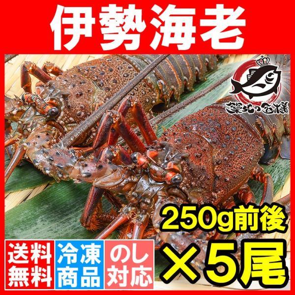 伊勢エビ 国産 伊勢海老 5尾 (BBQ バーベキュー) (えび 海老 エビ おせち)