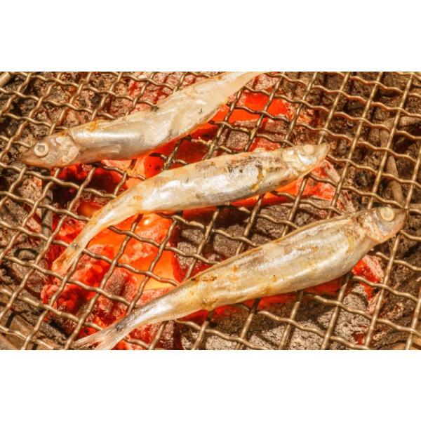 訳ありししゃも(1kg・業務用子持ちシシャモ)ししゃも シシャモ tsukiji-ousama 06