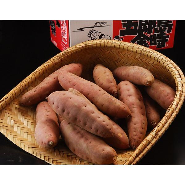 いも 芋 イモ 焼き芋 野菜 【加賀野菜認定】 『五郎島金時芋』 石川産 約2kg(3〜8本入)|tsukijiichiba|02