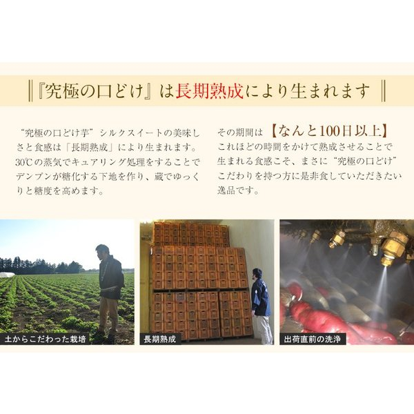 さつまいも 茨城県産 鹿吉のシルクスイート 1箱 約2kg 送料無料|tsukijiichiba|09