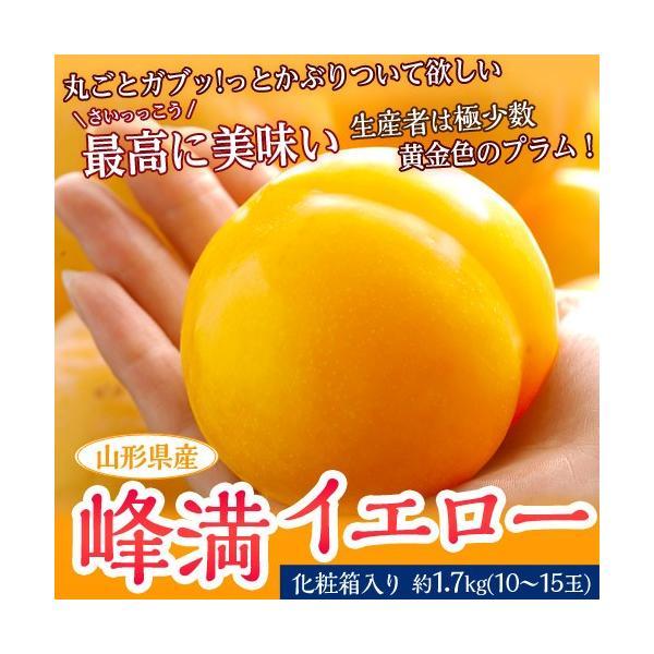 送料無料 山形県産 プラム 「峰満イエロー」 化粧箱 10〜15玉 約1.7kg|tsukijiichiba