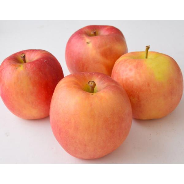 林檎 リンゴ 青森県産 ちょっと訳あり こみつりんご 6〜12玉 約2kg 秀A品 ムラ・小さな傷あり 常温 4箱まで同一配送先に送料1口で配送可能 tsukijiichiba 15