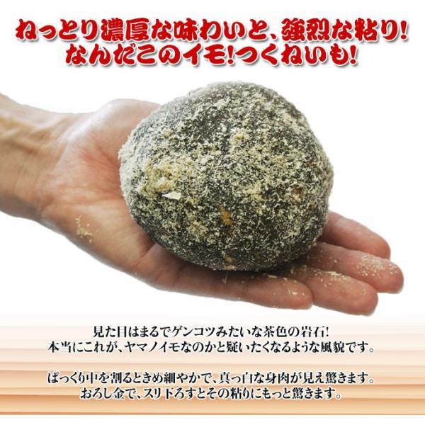 北海道・十勝高島産 『つくねいも』 (ヤマノイモ)  約3kg M〜Sサイズ(7〜18玉) ☆|tsukijiichiba|03
