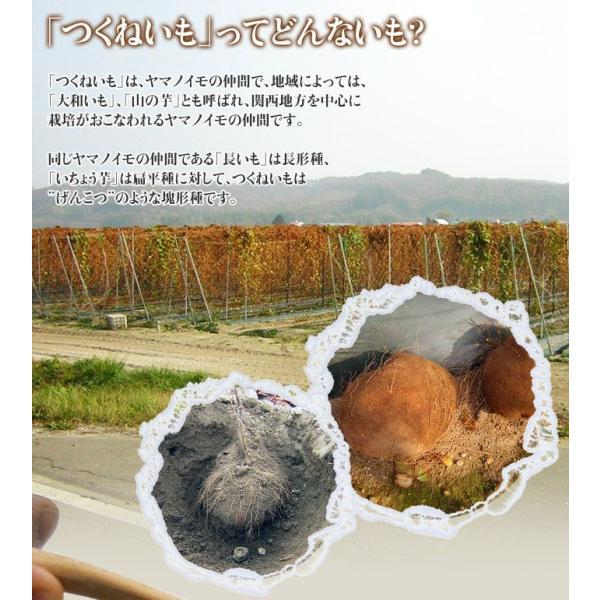 北海道・十勝高島産 『つくねいも』 (ヤマノイモ)  約3kg M〜Sサイズ(7〜18玉) ☆|tsukijiichiba|05