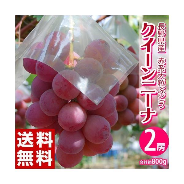 送料無料 長野県産赤ぶどう クイーンニーナ2房 合計約900g  frt ☆|tsukijiichiba