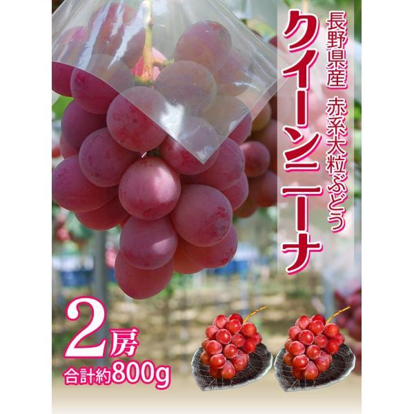 送料無料 長野県産赤ぶどう クイーンニーナ2房 合計約900g  frt ☆|tsukijiichiba|02