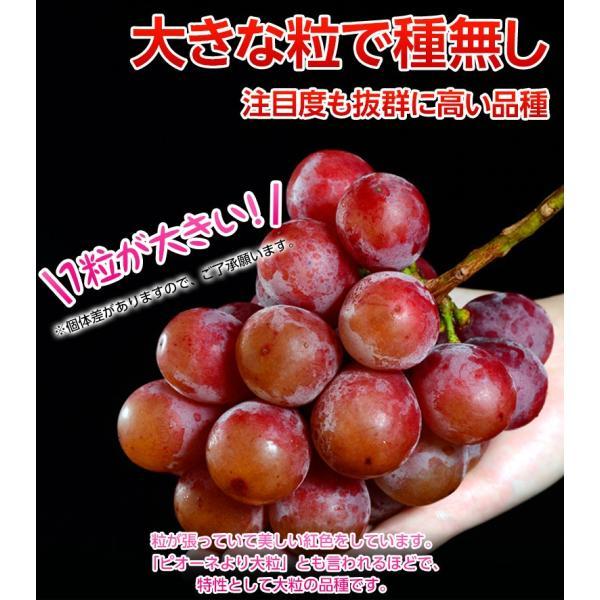 送料無料 長野県産赤ぶどう クイーンニーナ2房 合計約900g  frt ☆|tsukijiichiba|03