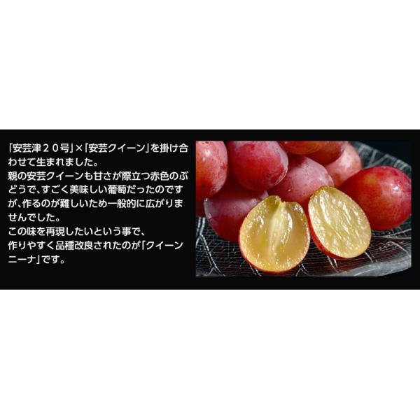 送料無料 長野県産赤ぶどう クイーンニーナ2房 合計約900g  frt ☆|tsukijiichiba|04