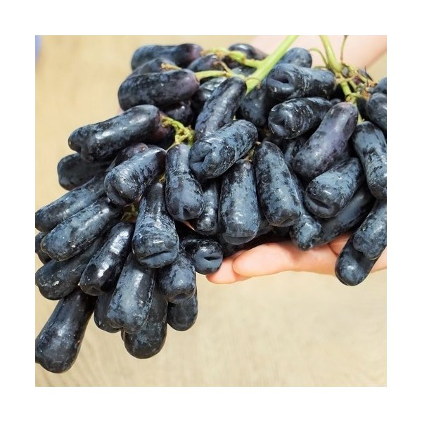 『スウィートサファイア』 Sweet Sapphire ブドウ アメリカ産 1バッグ 約1kg ※冷蔵