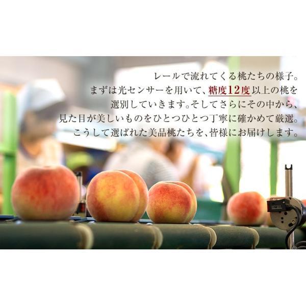 福島県産 桑折町 献上桃の郷 特選「雅」 約1.5kg(5〜6玉) 常温 産地直送 送料無料|tsukijiichiba|09