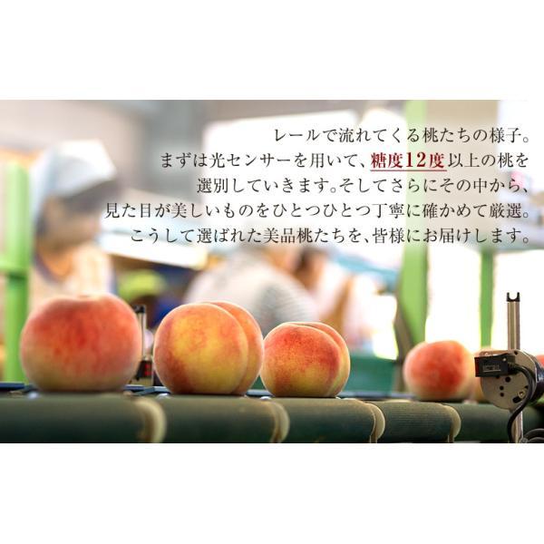 もも 桃 モモ 福島県産 献上桃の郷 桑折町 特選「雅」 約1.5kg(5〜6玉) 常温 送料無料 ギフト 贈答|tsukijiichiba|08