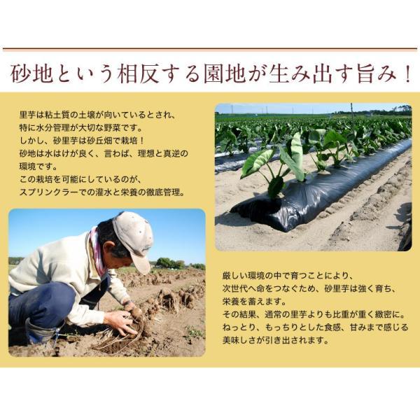 ブランド里芋 新潟県産 砂里芋(さりいも) Mサイズ 約2.5kg|tsukijiichiba|03