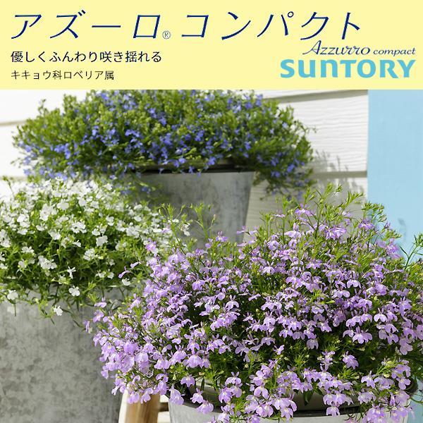 『アズーロコンパクト』3.5号ポット苗 ●1鉢● 全6色 ロベリア サントリーフラワーズ(SUNTORY FLOWERS)花壇苗
