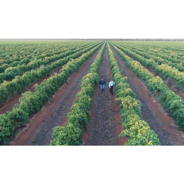 ゴシップス メルロー(オーストラリア赤ワイン750ml)|uluruweb|05
