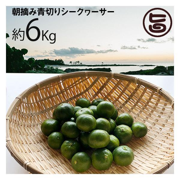 朝摘み青切りシークヮーサー 6kg(約240個〜330個) 沖縄 人気 シークワーサー 果実 たけしの家庭の医学 尿もれ 頻尿 ノビレチン 南国フルーツ 送料無料