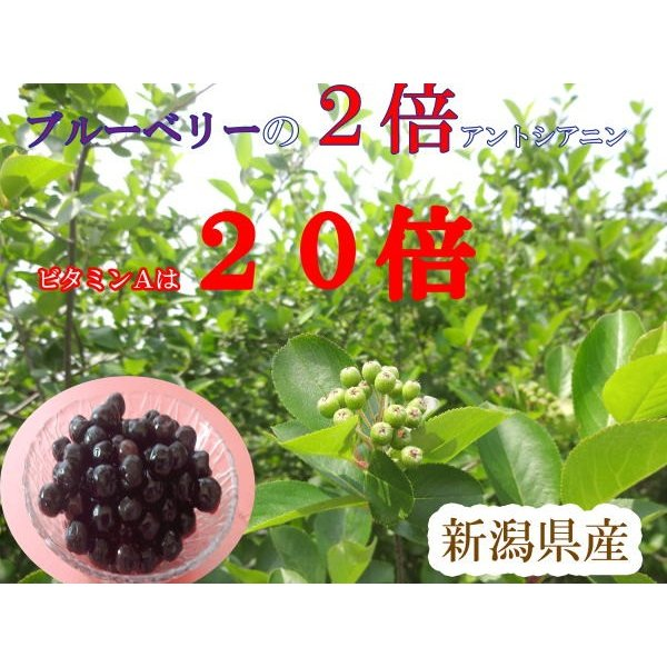 アロアニ&リンゴ果汁   500ml×12本