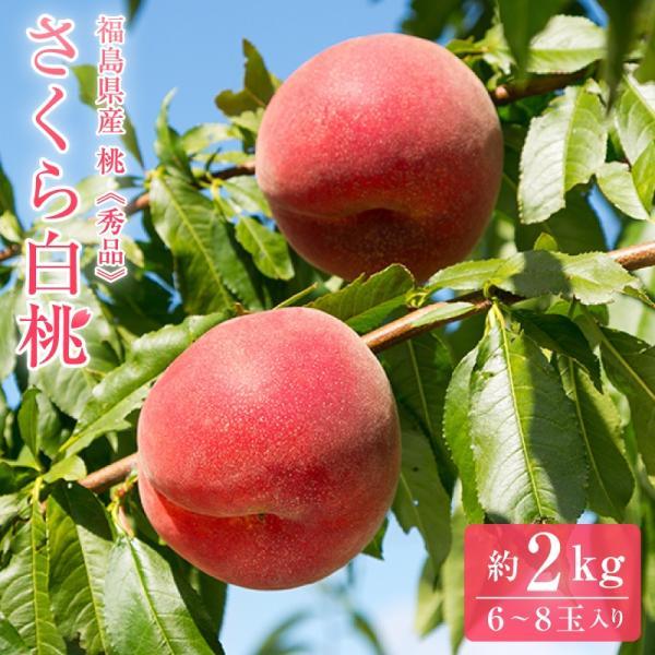 桃 もも モモ 白桃 福島県産 さくら白桃 秀品  約2kg(約6〜8玉)【送料無料】 福島産 夏ギフト ご贈答 プレゼント