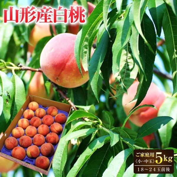 桃 白桃 山形県産白桃約5kg(18〜24玉前後)小〜中玉 ご家庭用 送料無料 桃 もも 白桃 モモ