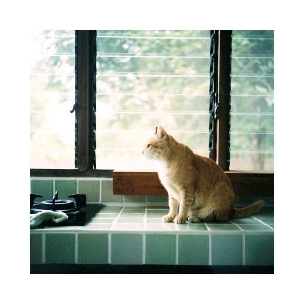 Rollei Life 著:MIKI|umd-tsutayabooks|03