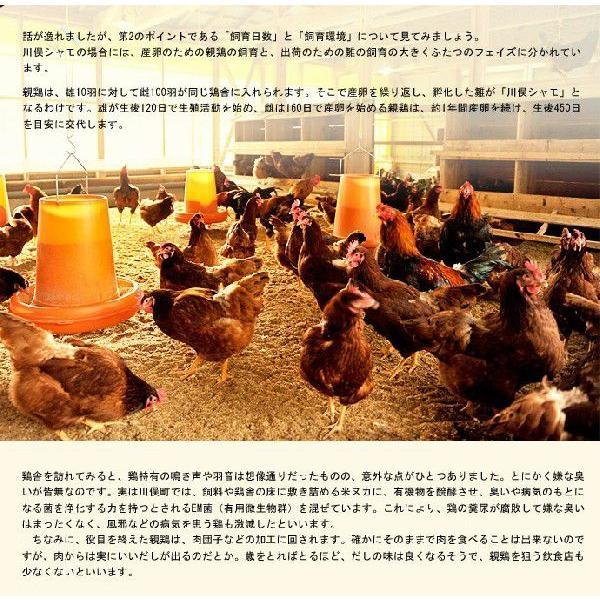 肉 鶏肉 ギフト 福島県 地鶏 川俣シャモ バラシ半羽 メス  500グラム以上 冷蔵|umeebeccyasannriku|05