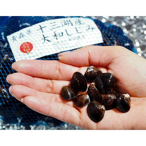「天然活しじみ」青森県十三湖産 小粒 たっぷり約1kg ※冷蔵 送料無料