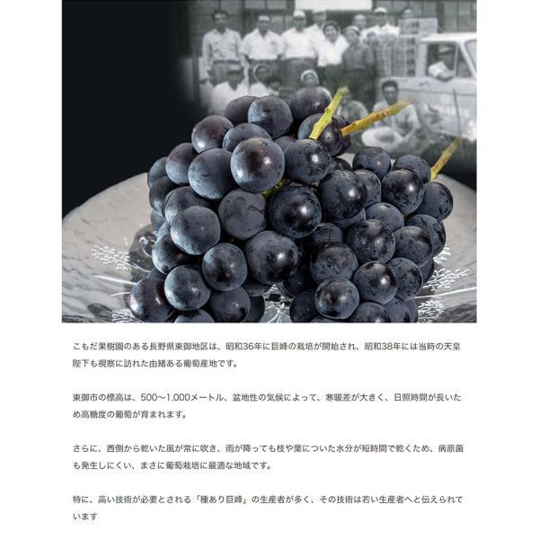 ぶどう ブドウ 葡萄 巨峰 長野県 東御こもだ果樹園 種あり巨峰 約400g×3房 約1.2kg 送料無料|umeebeccyasannriku|03