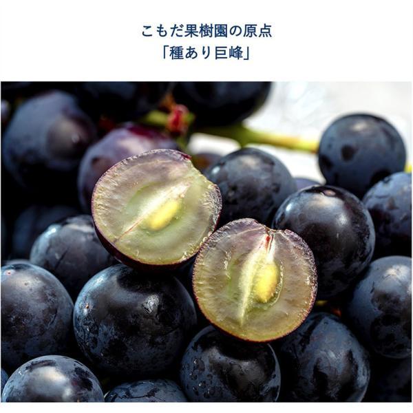 ぶどう ブドウ 葡萄 巨峰 長野県 東御こもだ果樹園 種あり巨峰 約400g×3房 約1.2kg 送料無料|umeebeccyasannriku|04