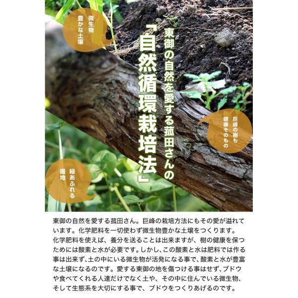ぶどう ブドウ 葡萄 巨峰 長野県 東御こもだ果樹園 種あり巨峰 約400g×3房 約1.2kg 送料無料|umeebeccyasannriku|07