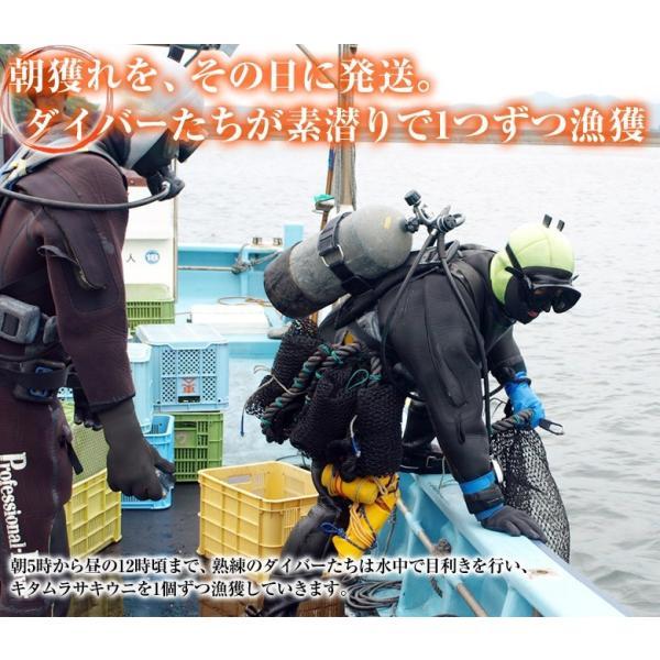 海鮮 送料無料 うに ウニ 宮城県産 お造り生うに 5個セット (1個100g前後) 産地直送 冷蔵|umeebeccyasannriku|04