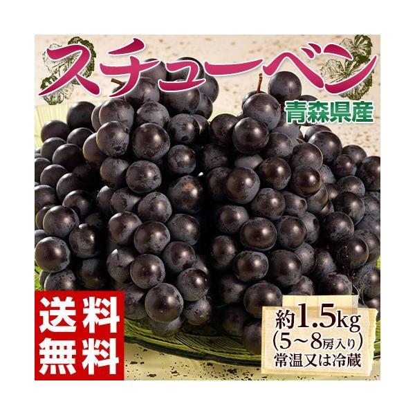 葡萄 ぶどう ブドウ青森県産 黒ぶどう スチューベン 5〜8房 約1.5kg 送料無料 常温又は冷蔵|umeebeccyasannriku