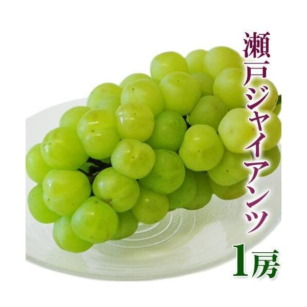 ぶどう 葡萄 ブドウ 岡山産 瀬戸ジャイアンツ 大房1房 約600g 送料無料