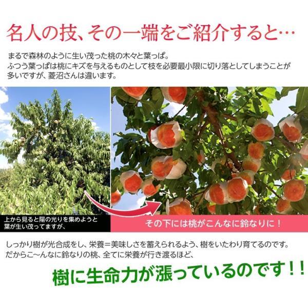 もも 桃 福島県産 菱沼農園 さくら白桃 秀品 約2kg (5〜7玉入) 送料無料 常温 umeebeccyasannriku 04